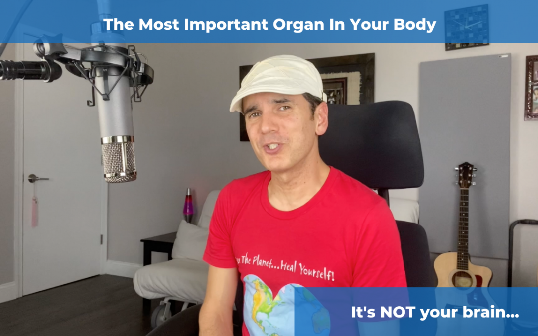 The Most Important Organ In Your Body